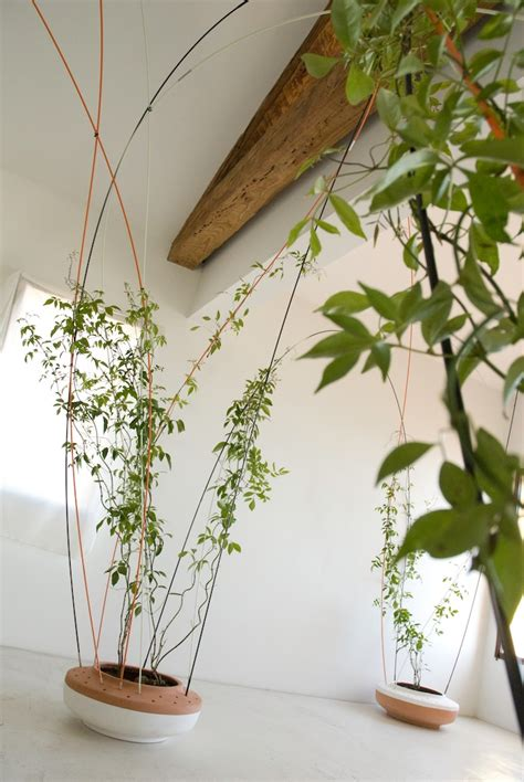 climbing houseplants to grow indoors tom 225 s alonso design studio greenroom