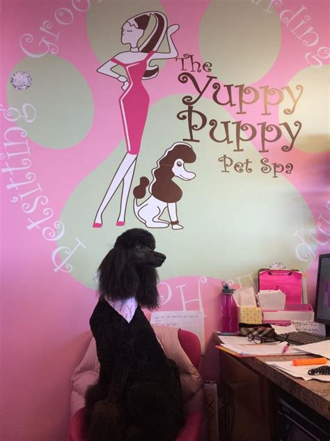 yuppy puppy winghaven yuppy puppy pet spa 3022 winghaven blvd o fallon mo pet services mapquest