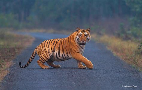 of tiger asia s infrastructure development threatens the world s