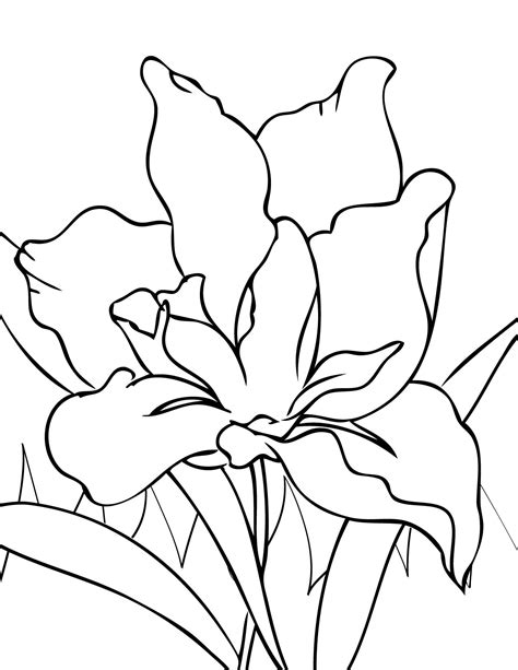 coloring pictures of iris flowers handipoints coloring pages primarygames com