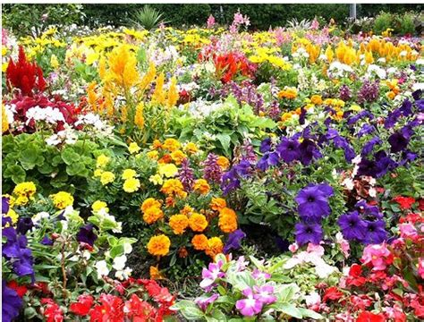 garden flower types bright colorful flowers at flower garden at lorne park jpg
