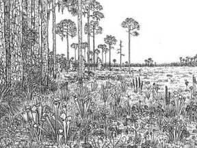 Detailed Landscape Coloring Pages For Detailed Coloring Pages For Adults Images About Colouring