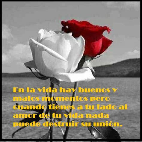 imagenes de rosa rojas con frase de amor imgenes bonitas para imagenes de flores con frases de amor son las rosas mas