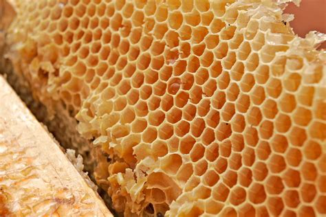 Honey Comb Honeycomb honeycomb wallpaper 1600x1067 wallpoper 305694