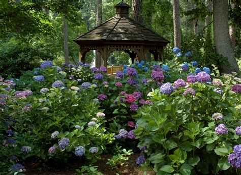 backyard gazebos pictures hydrangea garden gazebo norfolk botanical garden