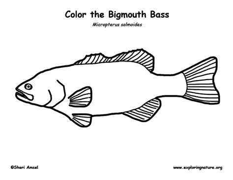 the gallery for gt coloring pages of bass fish