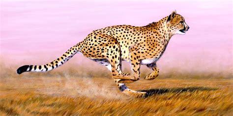 designcrowd wolf cheetah