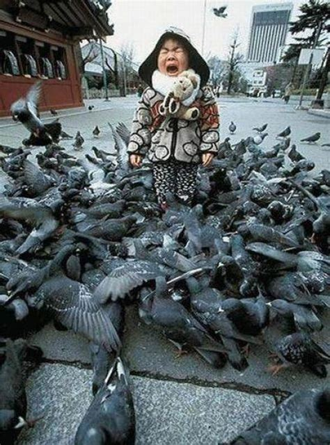 30 pictures of birds attacking people banned in hollywood