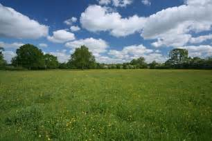 Buttercup Flower Pictures - fabulous fritillary meadows the wildlife trusts