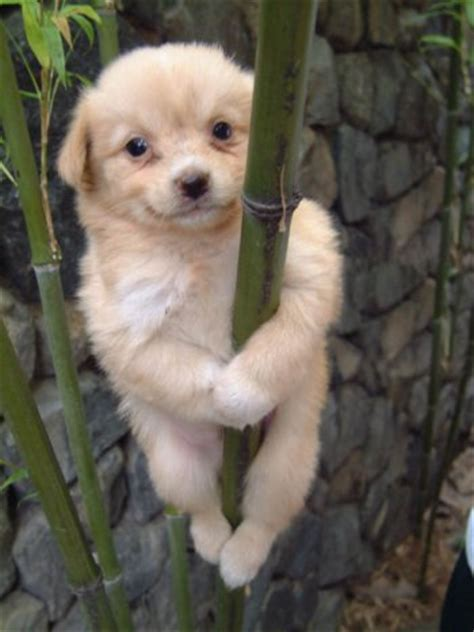 amazing dogs amazing climbing