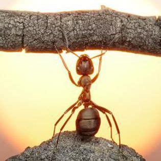 strong ant lifts wood sun facebook cover animals