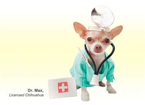 pet insurance  dogs  cats healthy paws pet insurance