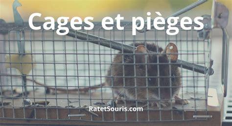 Capturer Une Souris by Cage Et Pi 232 Ge Pour Attraper Les Souris Et Les Rats Vivants