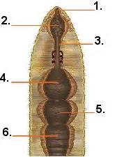 earthworm parts test quia earthworm parts quiz