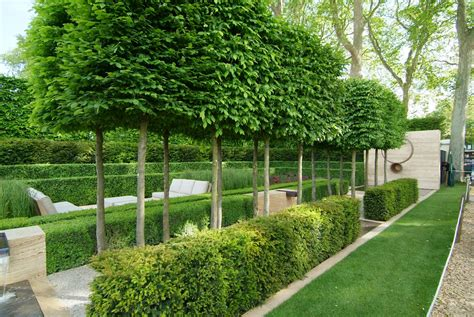nice landscape hedges 1 privacy hedge landscape design