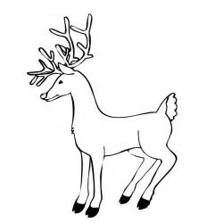 coloring pages for reindeer free coloring pages of reindeer