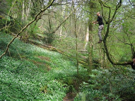 rope swing for tree rope swing bristol united kingdom uk