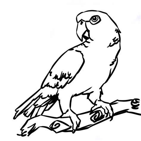 Dessin 195 Colorier De Perroquet Gris Du Gabon Coloriage A Dessiner De Perroquet Gris Du Gabon L
