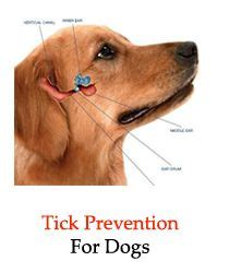 removing ticks from dogs 17 best ideas about tick removal on tick treatment tick repellent