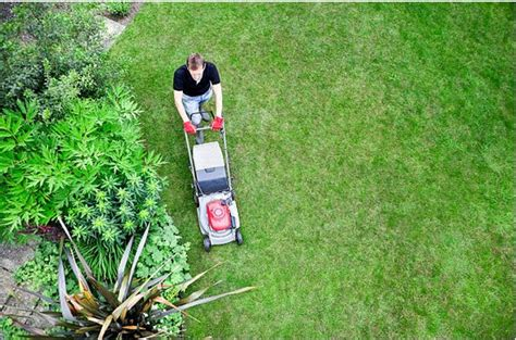 summer lawn care tips 11 early summer lawn care tips greg s small engine