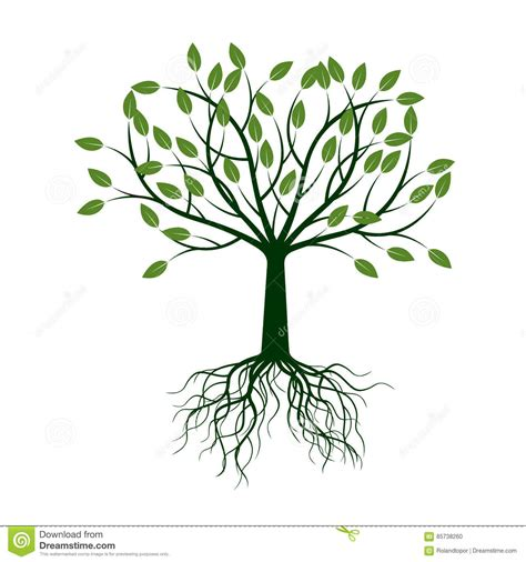 Green Tree With Leafs And Roots Vector Illustration Cartoon Vector Cartoondealer Com 88335713 Vector Green Tree Vector Cartoondealer 5477973