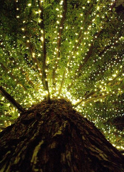 installation of fairy lights in trees 105 best fabulous lights images on decks decorative lights and deco