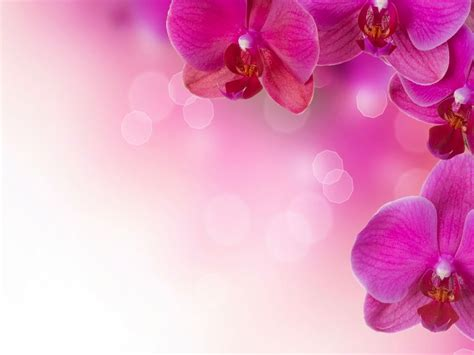orchid flower petals ultra hd desktop  wallpaperscom