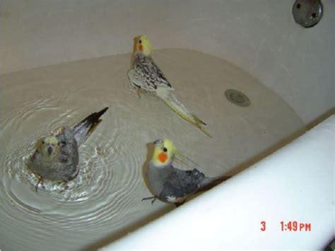 bath birds and bird baths on pinterest