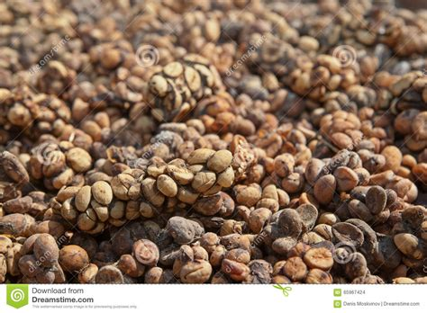 Franchise Coffee Bean Indonesia luwak coffee as made and sold in bali indonesia royalty