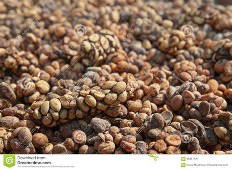 Coffee Bean Di Bali luwak coffee as made and sold in bali indonesia royalty free stock photo cartoondealer