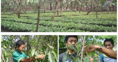 agribisnis produksi tanaman perkebunan tpb smk