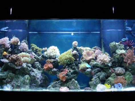 power compact reef lighting aquarium light bulbs on winlights com deluxe interior