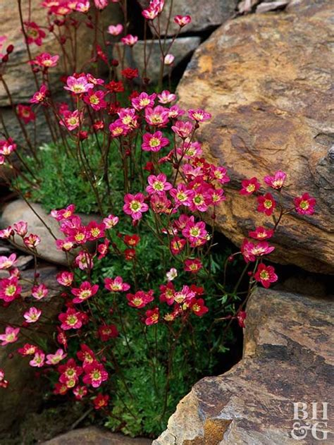 rocks in garden design best 25 rock garden design ideas on succulent