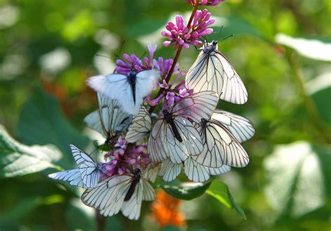 instinct butterfly  photo  pixabay