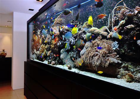 Top 10 Outstanding Aquariums Custom Aquarium Design