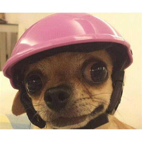 puppy helmet motorcycle helmets pets ridding caps hat abs plastic puppy hats
