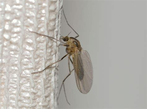 how to deter mosquitoes and other bugs nutritional institute