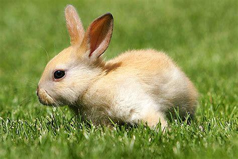 wann sind kaninchen ausgewachsen freilauf f 252 r kaninchen ein herz f 220 r tiere magazin