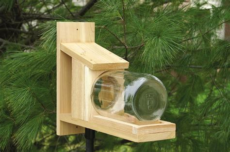 squirrel feeder pictures