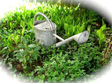irrigazione giardini fai da te impianti di irrigazione fai da te giardinaggio come