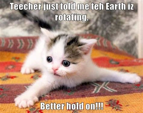 Cute Animals Memes - funny animal pictures of the day 48 pics kitties