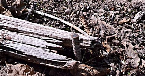 Landscape Timber Spikes Lazy Gardening Removing Landscape Spikes The Easy Way