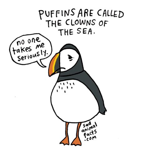libro sad animal facts i ve got some bad news about puffins order sad animal facts the book here barnes noble