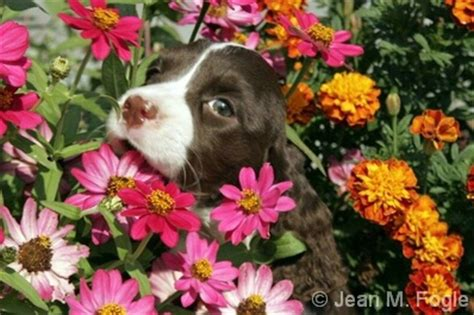 puppies and flowers puppies and flowers breeds picture