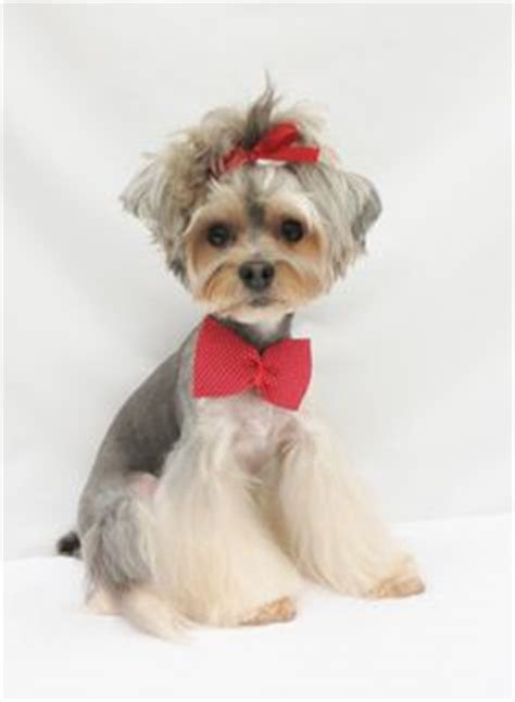 yorkie hair cut chart dog grooming looks styles on pinterest dog grooming