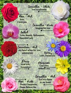 meaning of a flower the secret language of flowers
