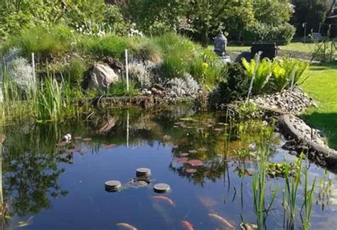 Schwimmteich Mit Fischen by Teich Anlegen Tipps Zu Planung Bepflanzung Und Mehr