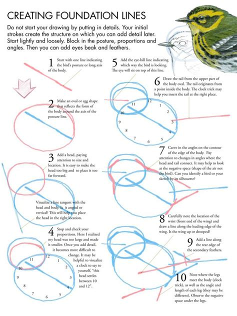 libro drawing birds learn to drawing birds tutorial