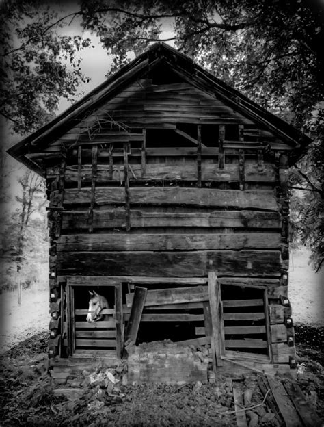 daniel boone cabin photograph by wiles