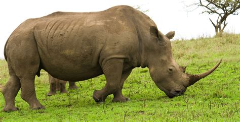 black rhino crystal cruises black rhino www fashion lifestyle